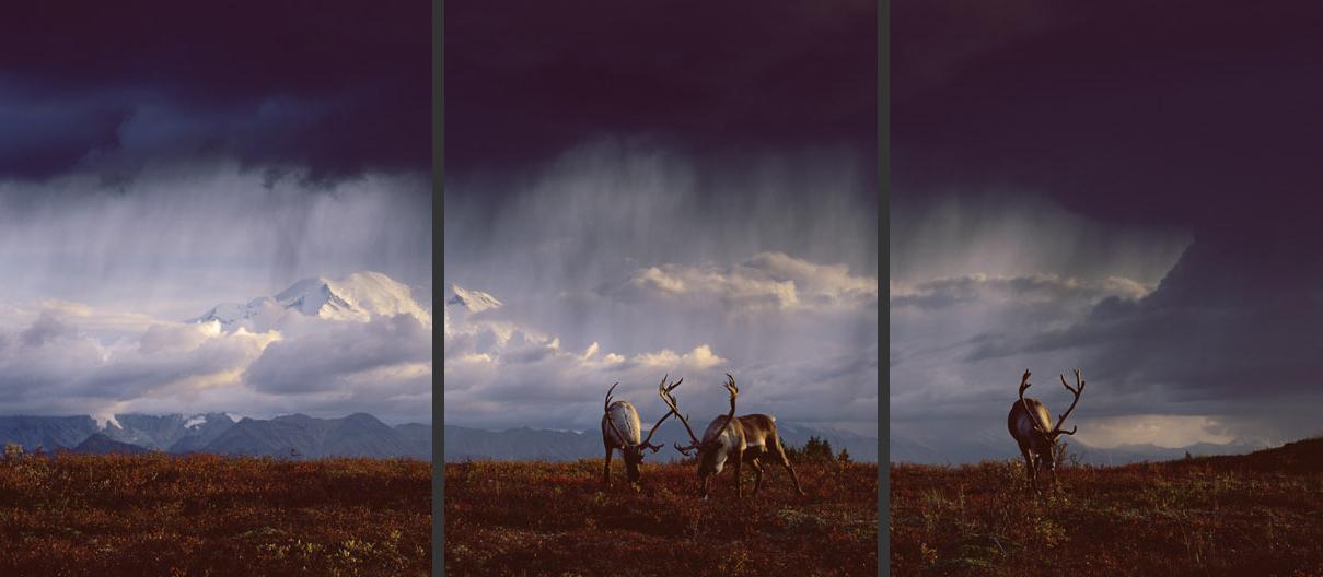 Tundra Thunder Triptych