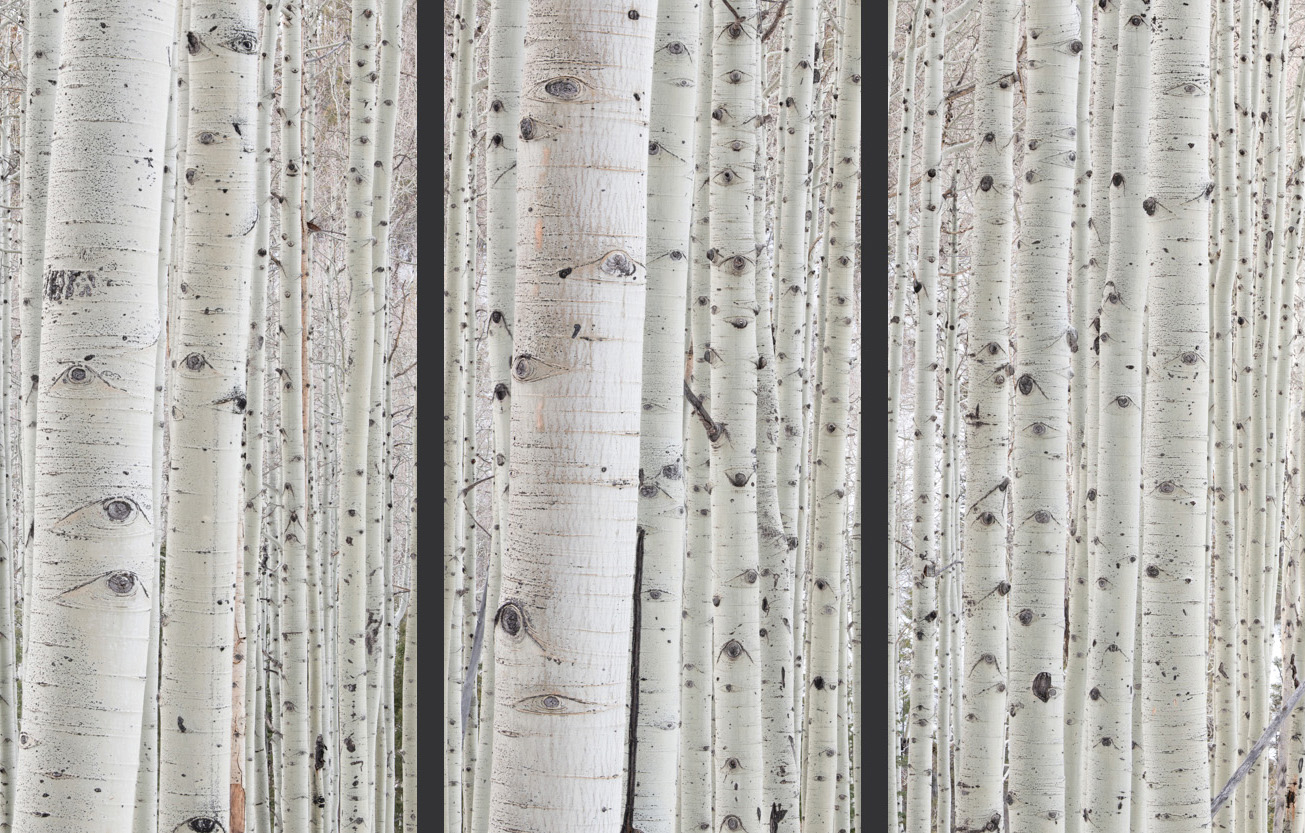 Winter Aspens Triptych