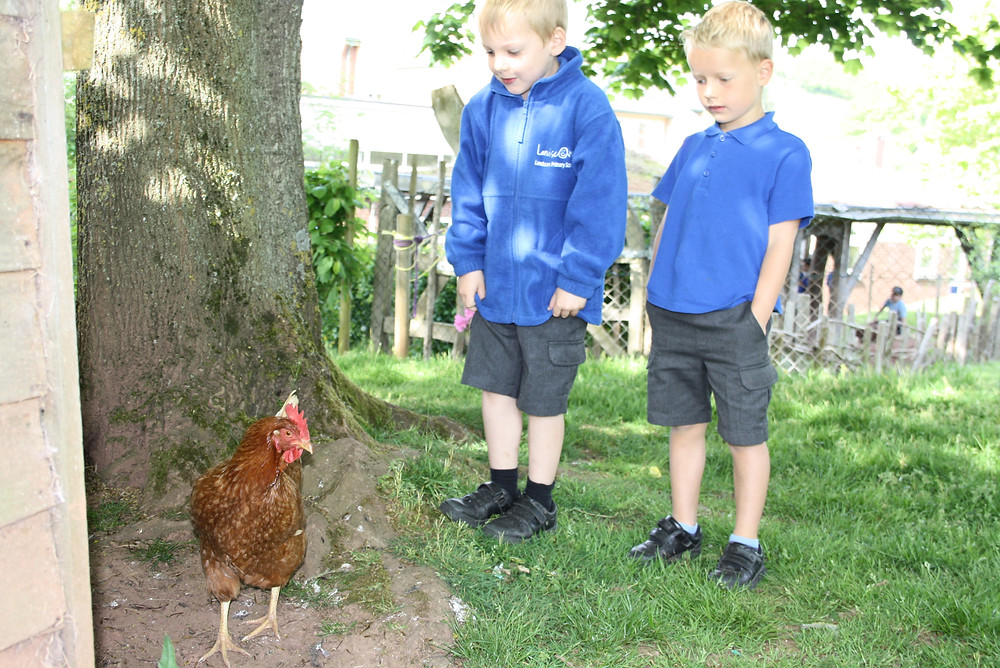 Our chickens, rabbits and guinea pig enjoyed hiding from their human friends!