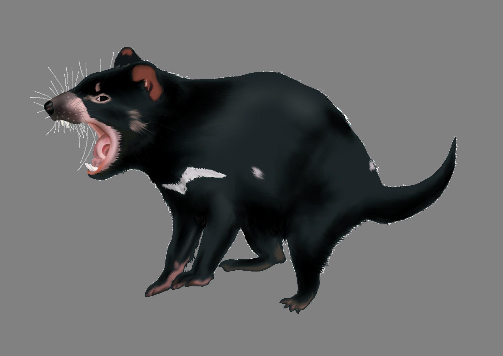 Alicia - tasmanian devil (1)