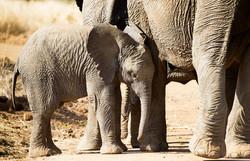 elephant-1169258