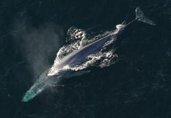 blue-whale-1198719