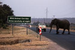 Elephants by Tempe Adams