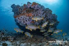 SEIFERT.Maldives_N814660-1_copy.jpg