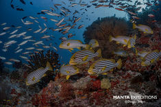 SEIFERT.Maldives_N817375-1_copy.jpg