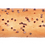 Thumbnail: Палочка хлебная с маком