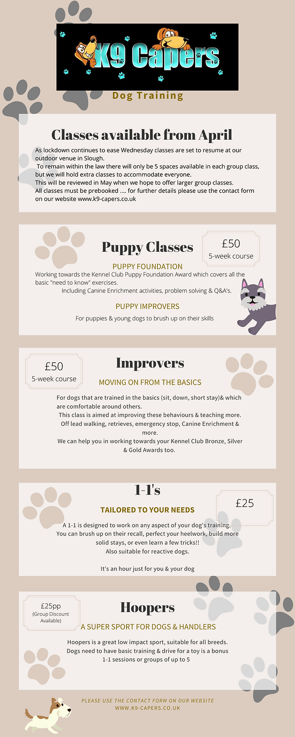 Blue Paw Print Dog Process Infographic.p