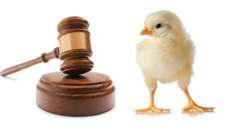 Los animales: ¿son sujetos de Derecho?
