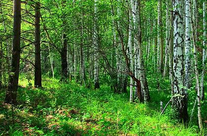 forest-landscape-10449777.jpg