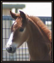 2011_freckles.jpg