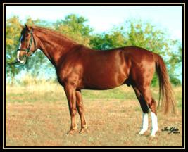 cavallo_framed.jpg