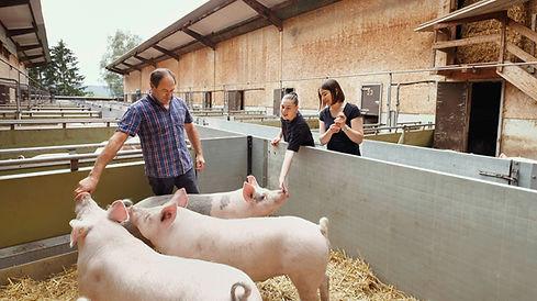 Papa mit Schweinen.jpg