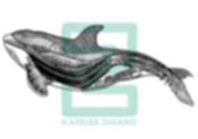 whale-01.png