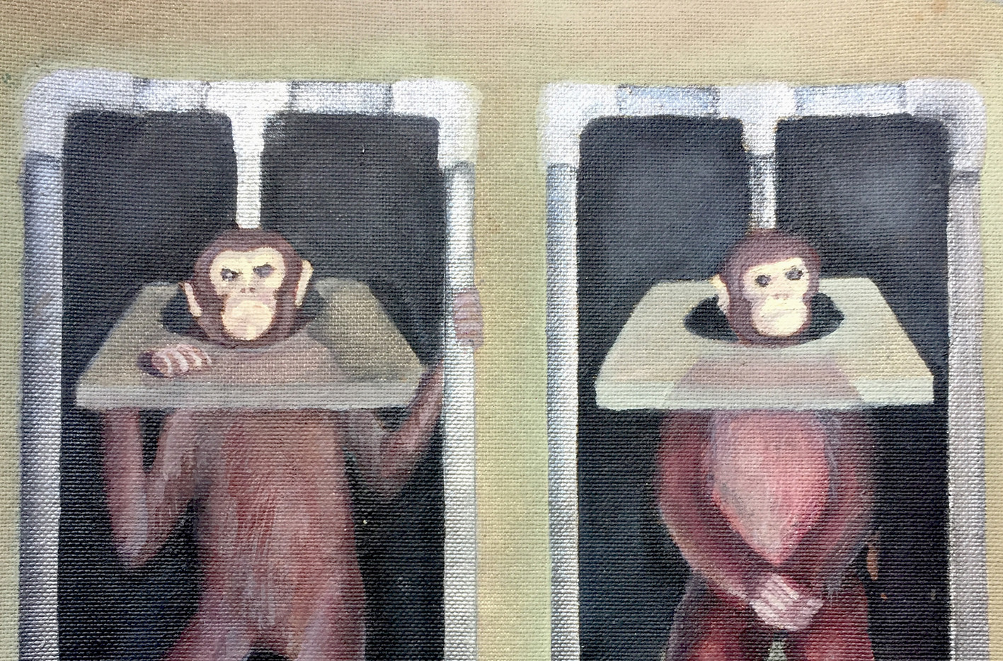 Monkeys in Lab22.jpg