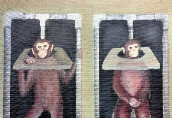Monkeys in Lab22.jpg
