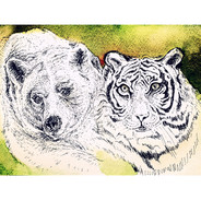 _Ours & Tigre Regardent.jpg
