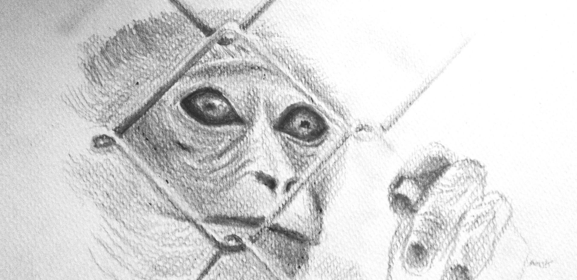 Monkey Sketch.jpg