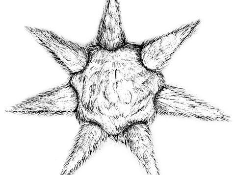 Piñata_Fur_Sketch1.jpeg