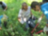 Volunteer-gardening.jpg