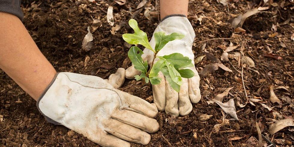 Moore Aloha X Healthy Climate Communities