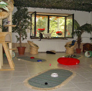 Dschungel-Zimmer