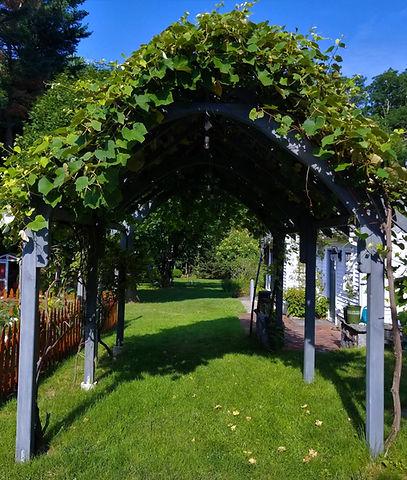 Our Grape Arbor