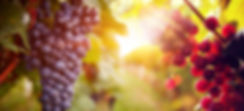 grapes web 2.jpg