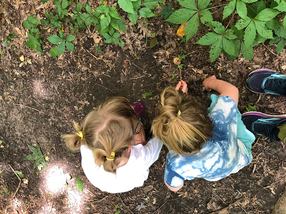 nature journaling with kids