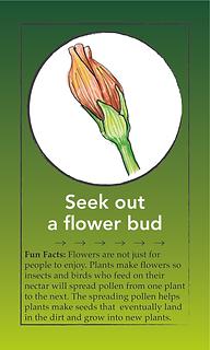 flower bud card.tif