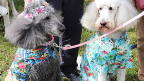 19th ANNUAL HOWL-O-WEEN PET PARADE