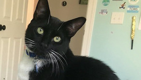 Whiskey - MISSING CAT