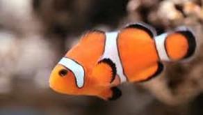 Flushing Nemo