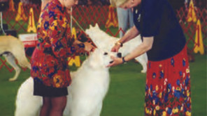 Blue Ridge Classic dog shows go on