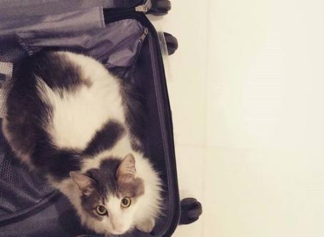 Tem um bichinho de estimação mas quer viajar? Um petsitter pode ser a solução!