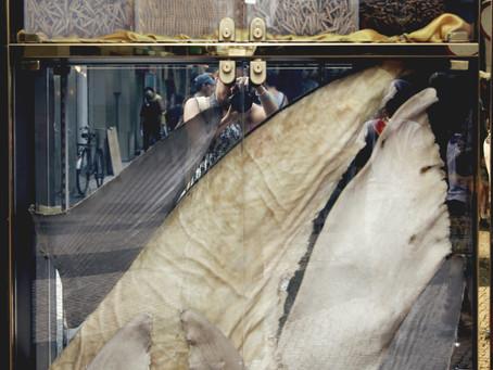 Barbatana de tubarão: o preço da ostentação