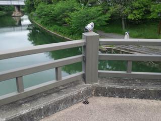 伏見港公園にて
