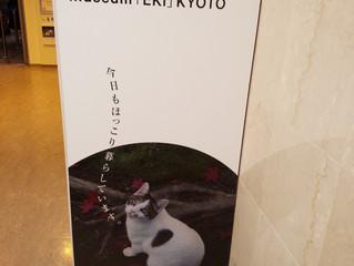 ネコの京都写真展