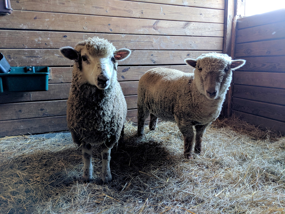 These two are the sweetest, cutest girls to join the flock.