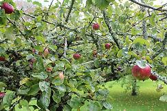 Pomarius Residency Orchard