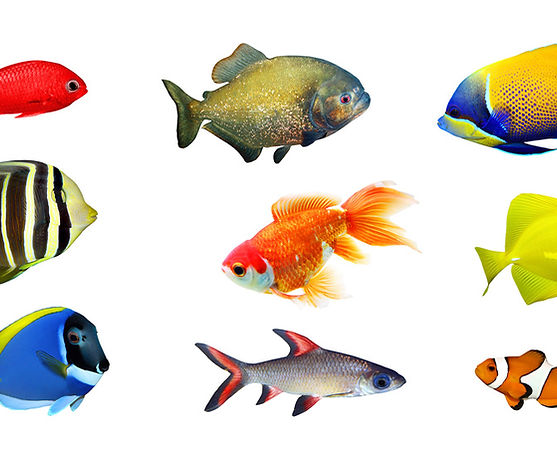 White background, bright images of different types of fish