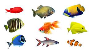 Aquarium Expert Debunks Myths
