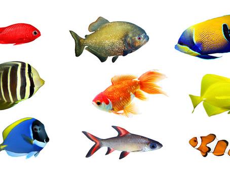 רשימת שמות בדיוניים לדגים