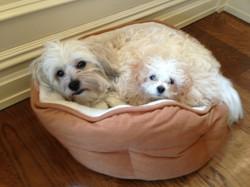 Winnie and Libby
