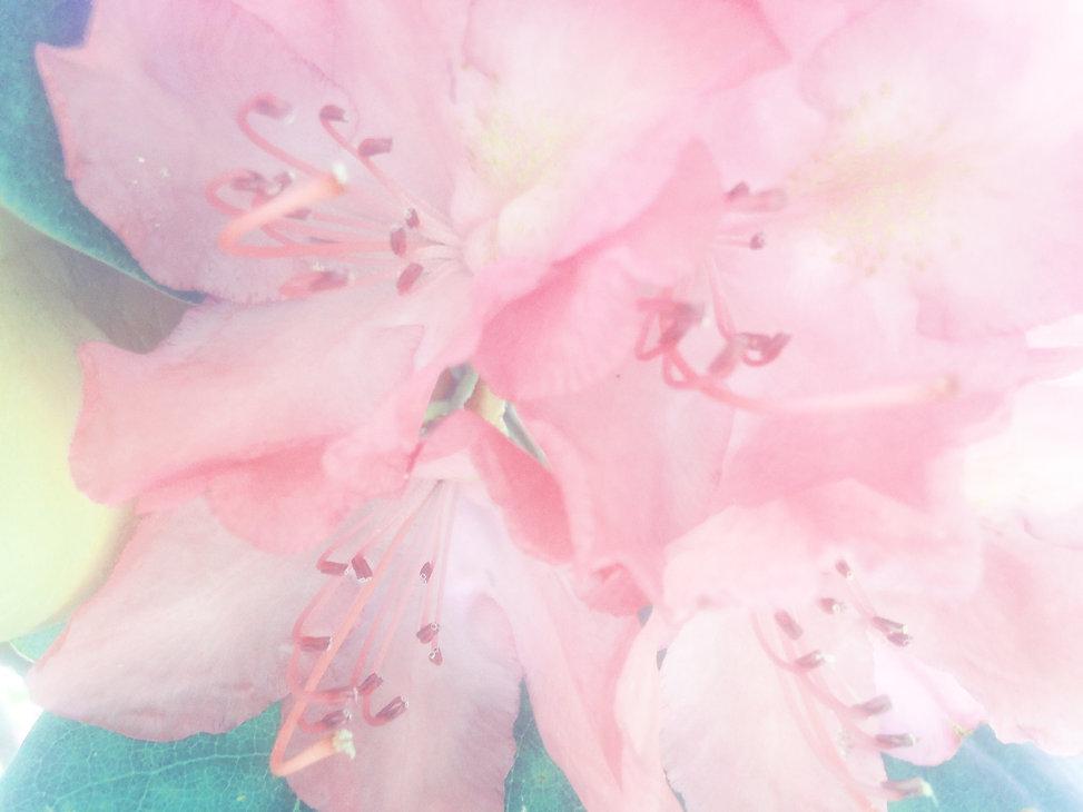 pastelflowers.jpg