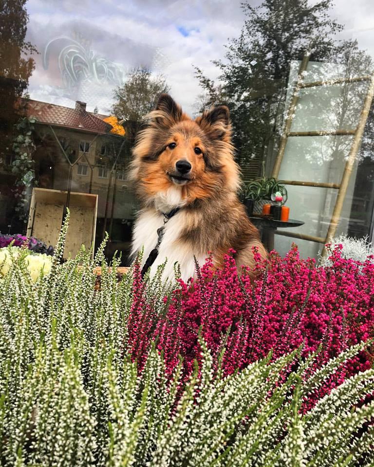 Butikshunden Milo!