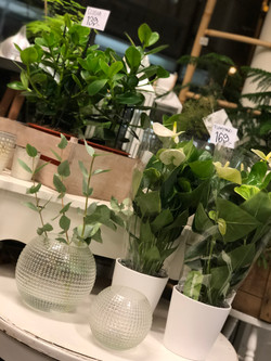 Inredning, krukväxter