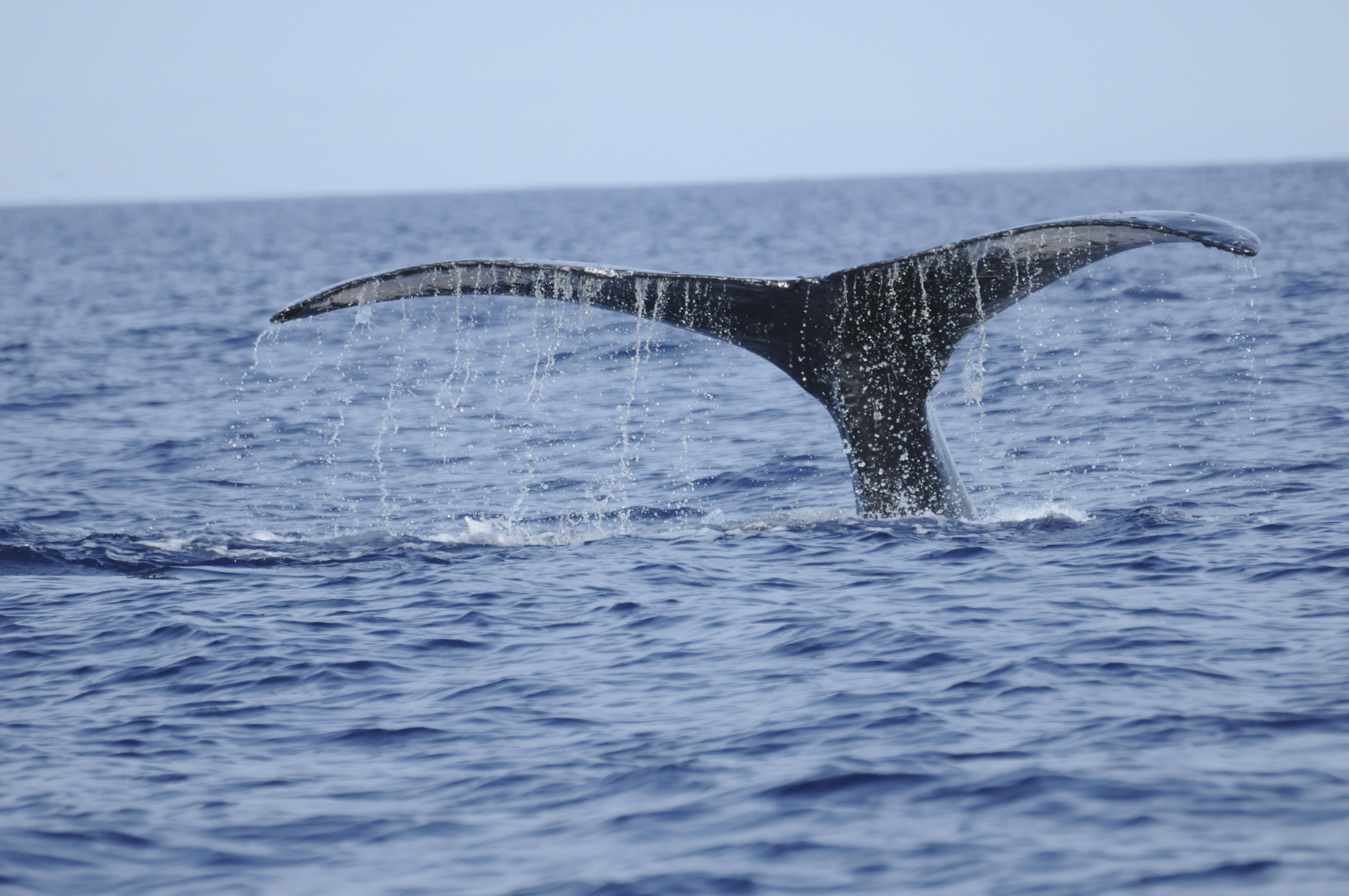 Dias_Animals_2011_4_Maui
