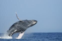 Dias_Animals_2011_5_Maui