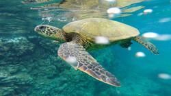 20140505_Hawaii2014_58