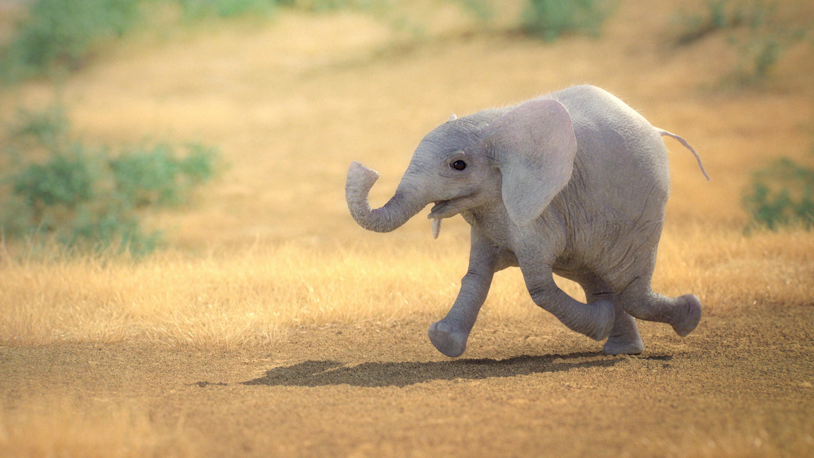 Baby Elephante